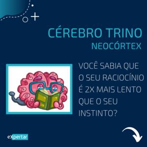 cerebro_neocortex_pnl