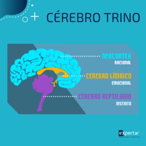 cerebro_trino_pnl_estrutura